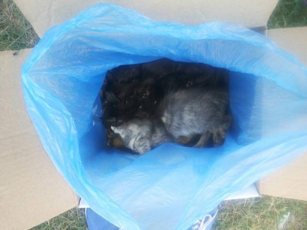 котята 1 мертвые севастополь