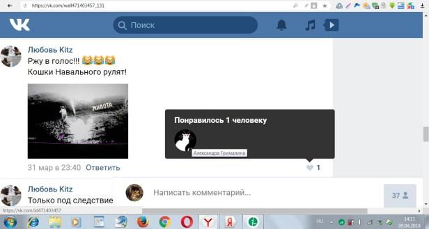 шарг кошки навального рулят
